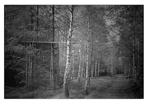 Birch Trees   Leipzig