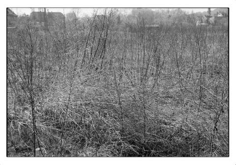 Fringe   near Leipzig